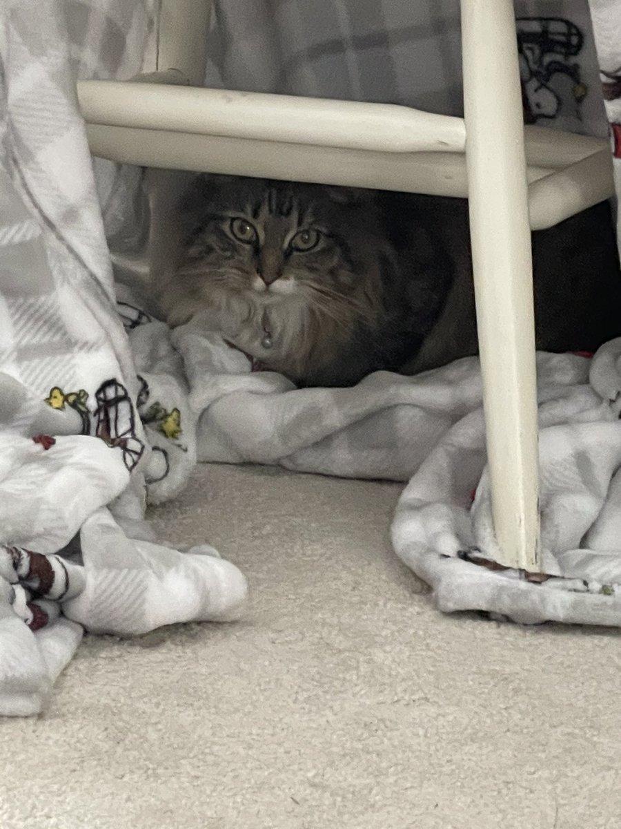 My cat's hang out B) #CatsOfTwitter #cat #kitten #furry #cute #chair #streamer #hangout
