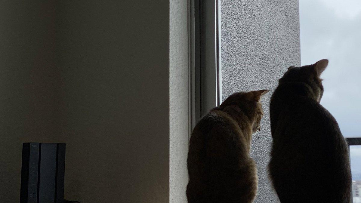 #猫 #ネコ #cat