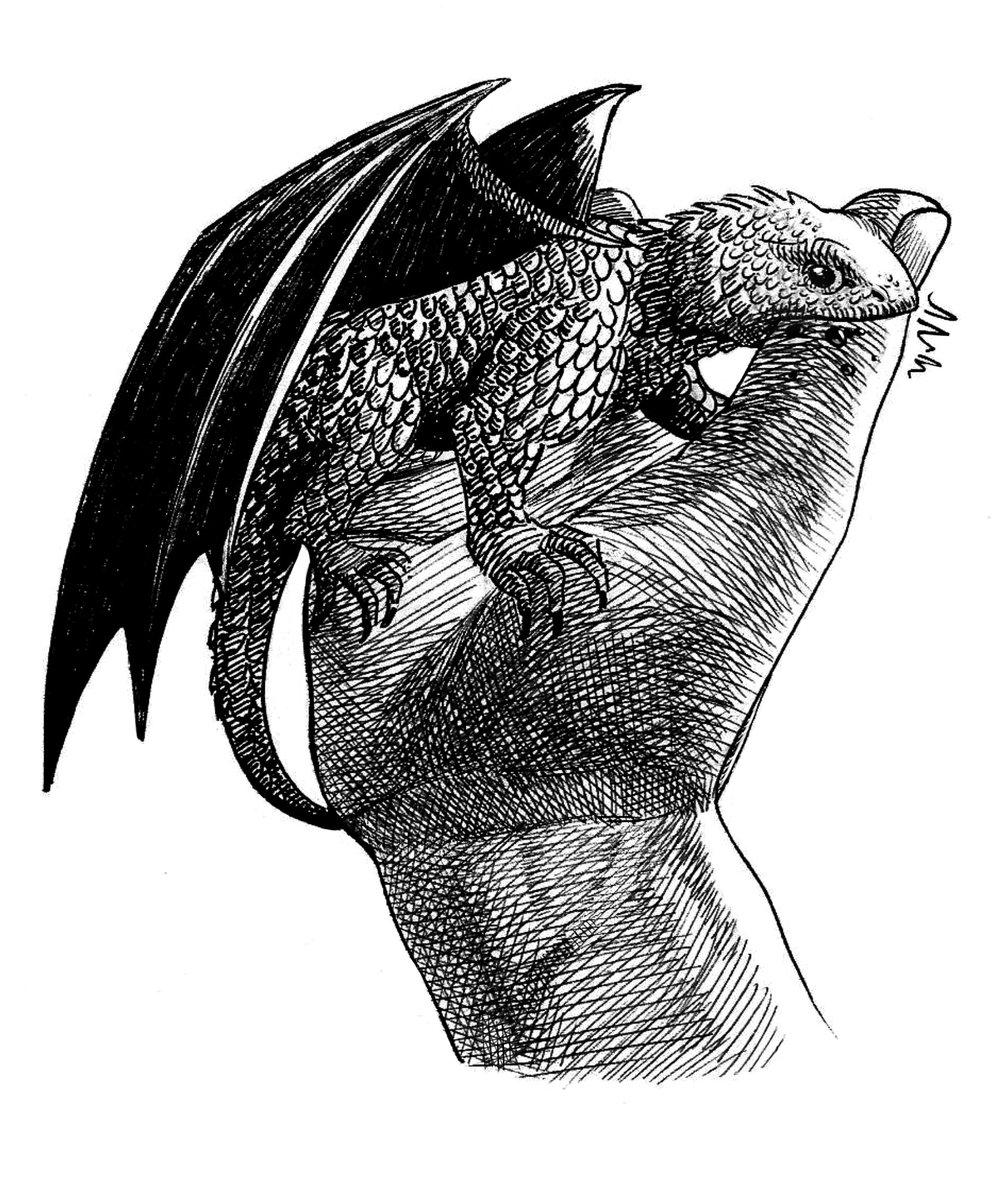#dibujo #drawing #digitalart #dragons