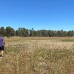Beaut day out at Reedy & Loch Garry wetlands talking about the sites' environmental & cultural values. The wetlands are now in a drying phase but we still spotted lesser joyweed, water primrose, water pepper & old man weed. #yortayorta #waterfortheenvironment