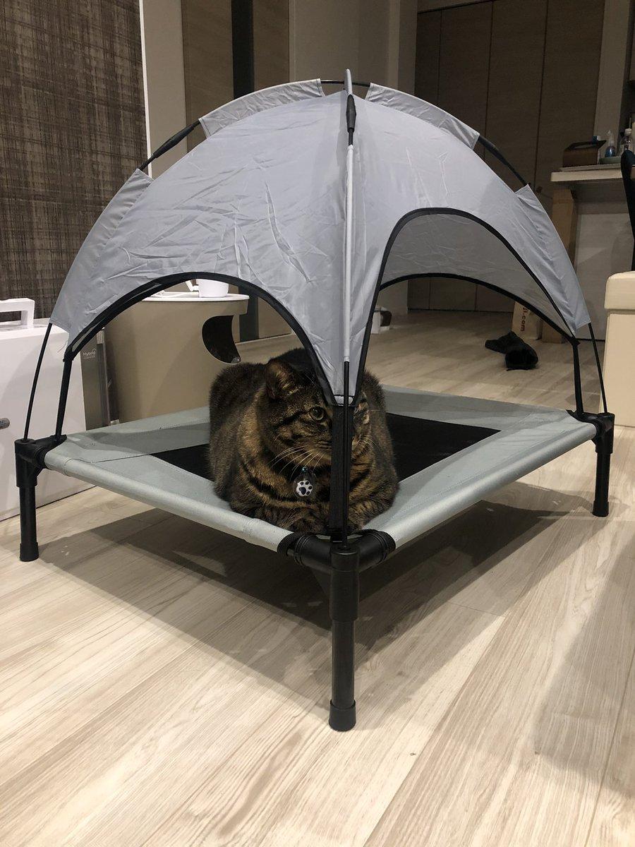 ことらアウトドアデビュー🏕  #猫好きさんと繋がりたい #猫のいる暮らし #猫 #ねこ #cat #猫腎不全 #拡散希望 #ネコ #猫のいる幸せ #キジトラ #猫部