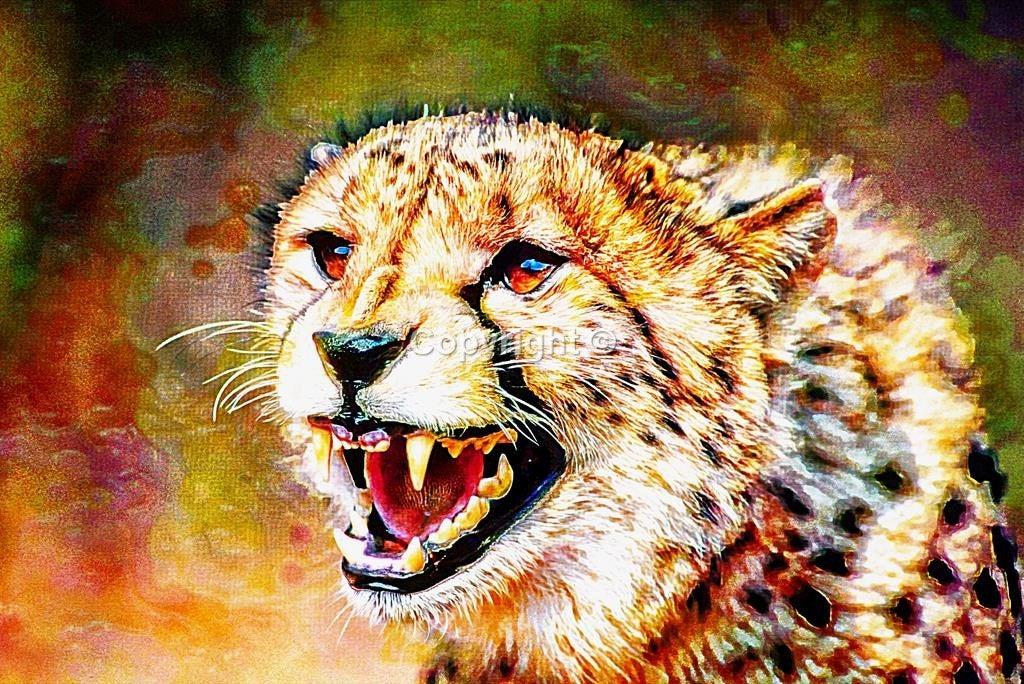 Cheetah #cat #bigcat #Animal #Cheetah - Print Run of 100  #JohnCookeArtist #JohnCooke