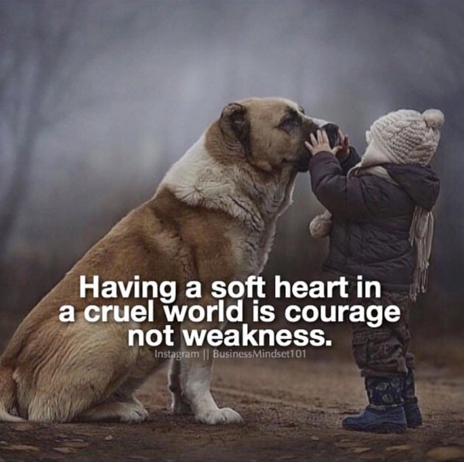 Having a soft heart in a cruel world is courage not weakness! #fridaymorning #fridaydaymotivation #FridayFeeIing #fridaymood #friday #motivation #quotes #quote #Inspiration #inspirationalquotes #inspirational