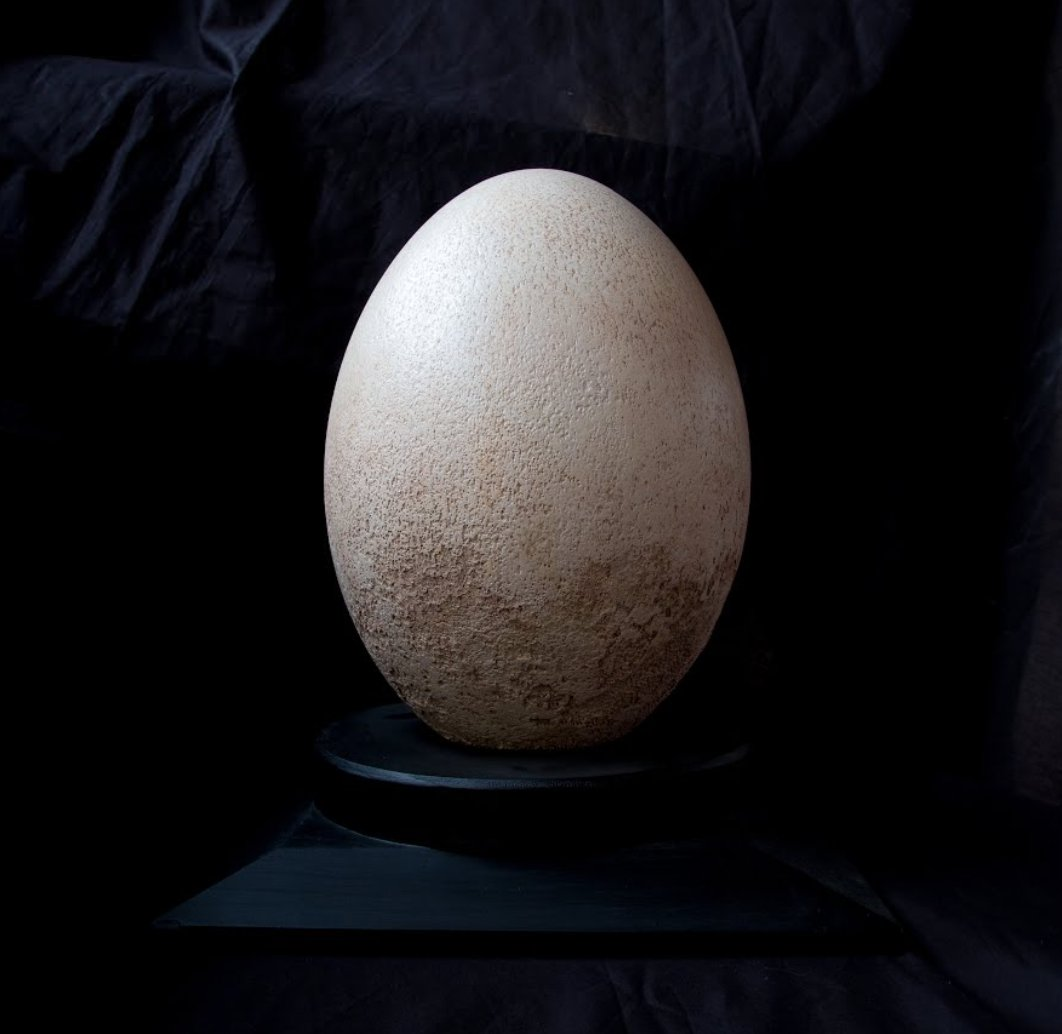 Can you guess which animal laid this egg?  @MsnVenezia