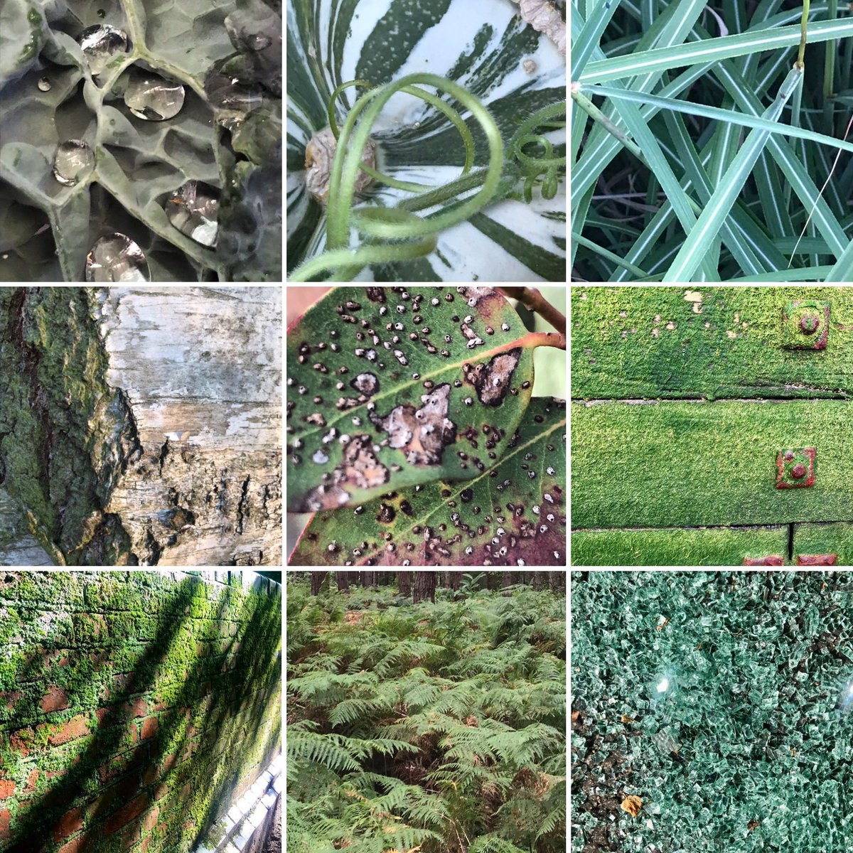 Friends, it's almost a year of the #pandemic, & my #texturehuntergatherer began 12 March 2020, a creative refocus & simple to do. Join in! Find a fascination for colours & textures wherever you are. Slow thoughts & find solidarity in minutiae #mentalhealth #anxiety #wellbeing