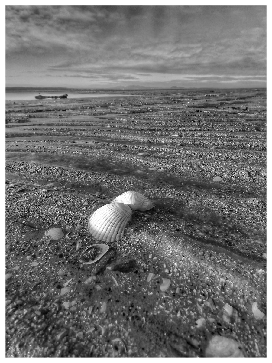 The echoes of last night's high tide still sound in the sand. Mirroring the contours of the beached shells. #blackandwhitephotography #beach #photography