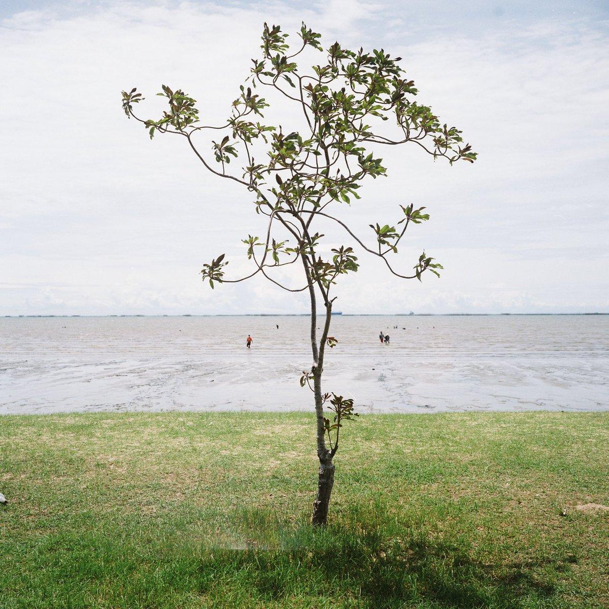 Peace by the beach , Mamiya 6MF #filmphotography #believeinfilm #filmisnotdead #photography #Kodak #beach #Thailand