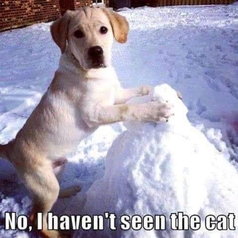 What cat? #cat #dog #snow