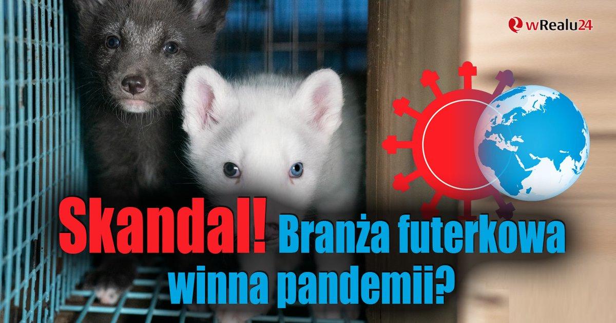Skandal! Branża futerkowa winna pandemii?