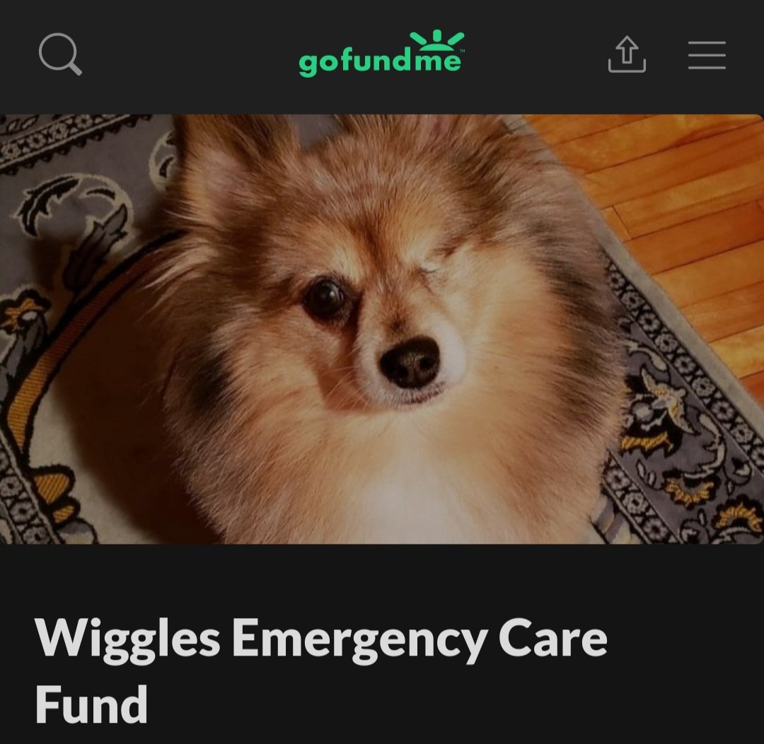 On Tuesday our dogs were attacked and injured by significantly larger dogs while we were out on a walk.   To read more visit https://t.co/gG0fZEfXuI  If you can, please help us spread this post to your circles. Words of encouragement are always welcomed and appreciated, too ❤ https://t.co/CtUkudodI1