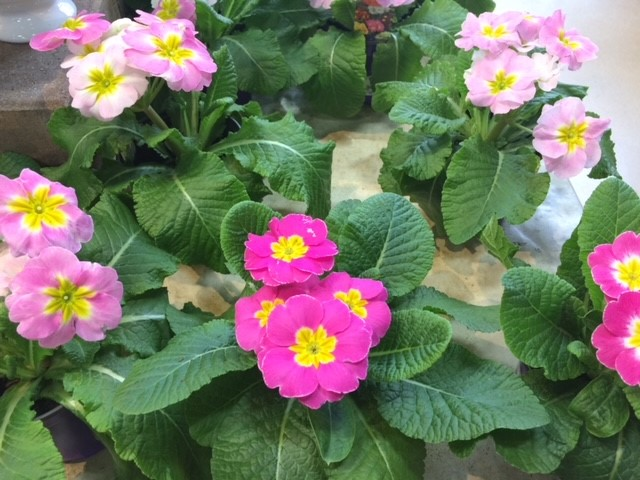 Brighten up your day with a pretty plant! Treat yourself or surprise a neighbor.  #happy #FlowersOnFriday #healthy #passitforward
