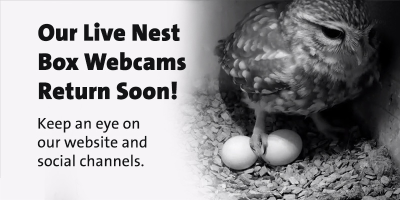 We have some rather exciting news... Sign up to our newsletters and keep an eye on our social media channels to be the first to know when they return! #cjwebcams #NestWatch