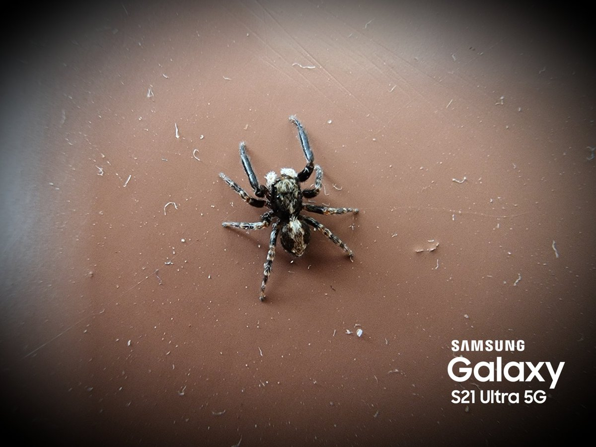 How a tiny little #spider can be big... 😱🕷️🕸️  Picture #Samsung #GalaxyS21Ultra 5G 📱 AUB9 #UltraWide #CloseUp  #withGalaxy #TeamGalaxy #TeamSamsung #TeamExynos #GalaxyFriends #SamsungMembers