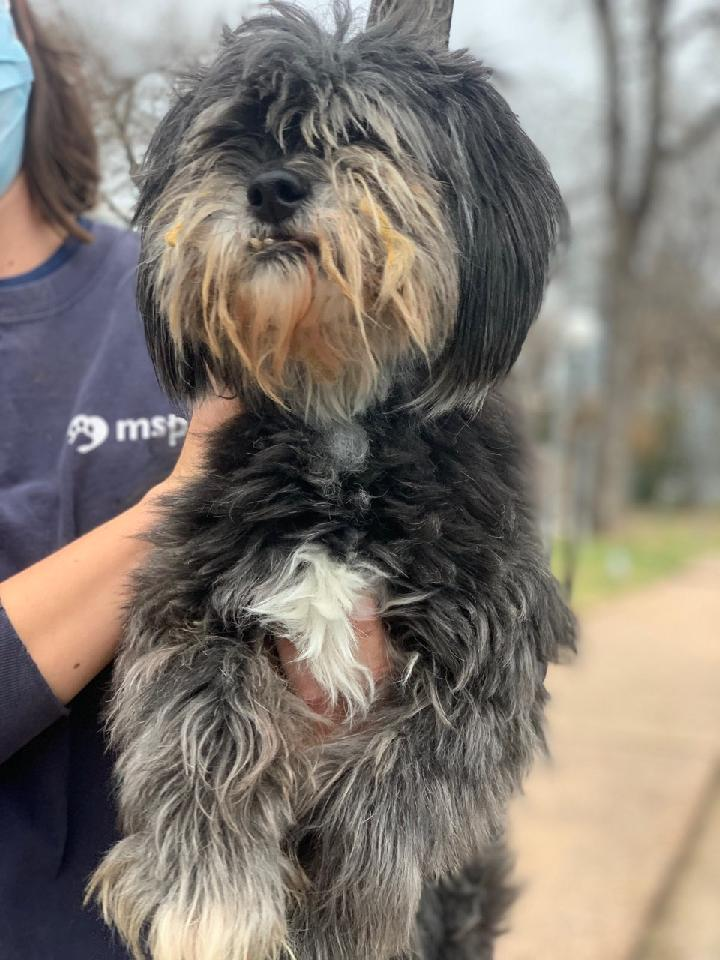 Teams from @NEAnimalShelter and @MspcaAngell are returning from Texas where shelters are overwhelmed because of the recent winter weather. Around 100 dogs and cats are about to call Massachusetts home. If you want to help: