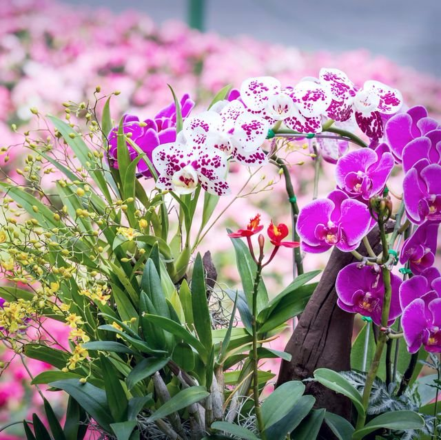 #Flowers Variety is The Spice of Life ,More so if they are #orchids , Always #beautiful ...Have a lovely Upcoming weekend Friends💐💐💐🙏