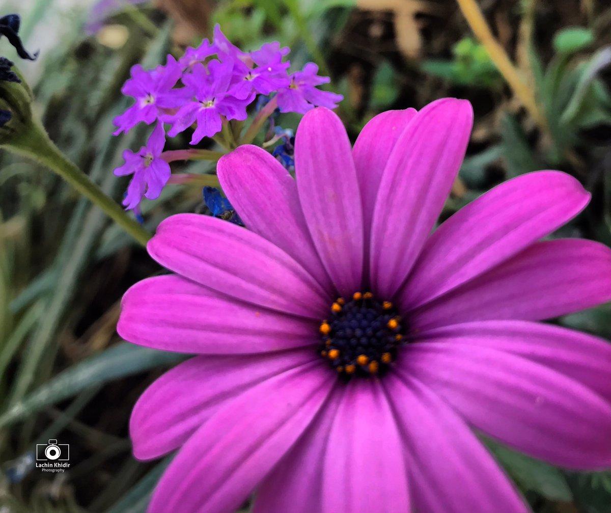 #PURPLEPOWER #FlowersOnFriday #photography #beautiful #Kurdistan