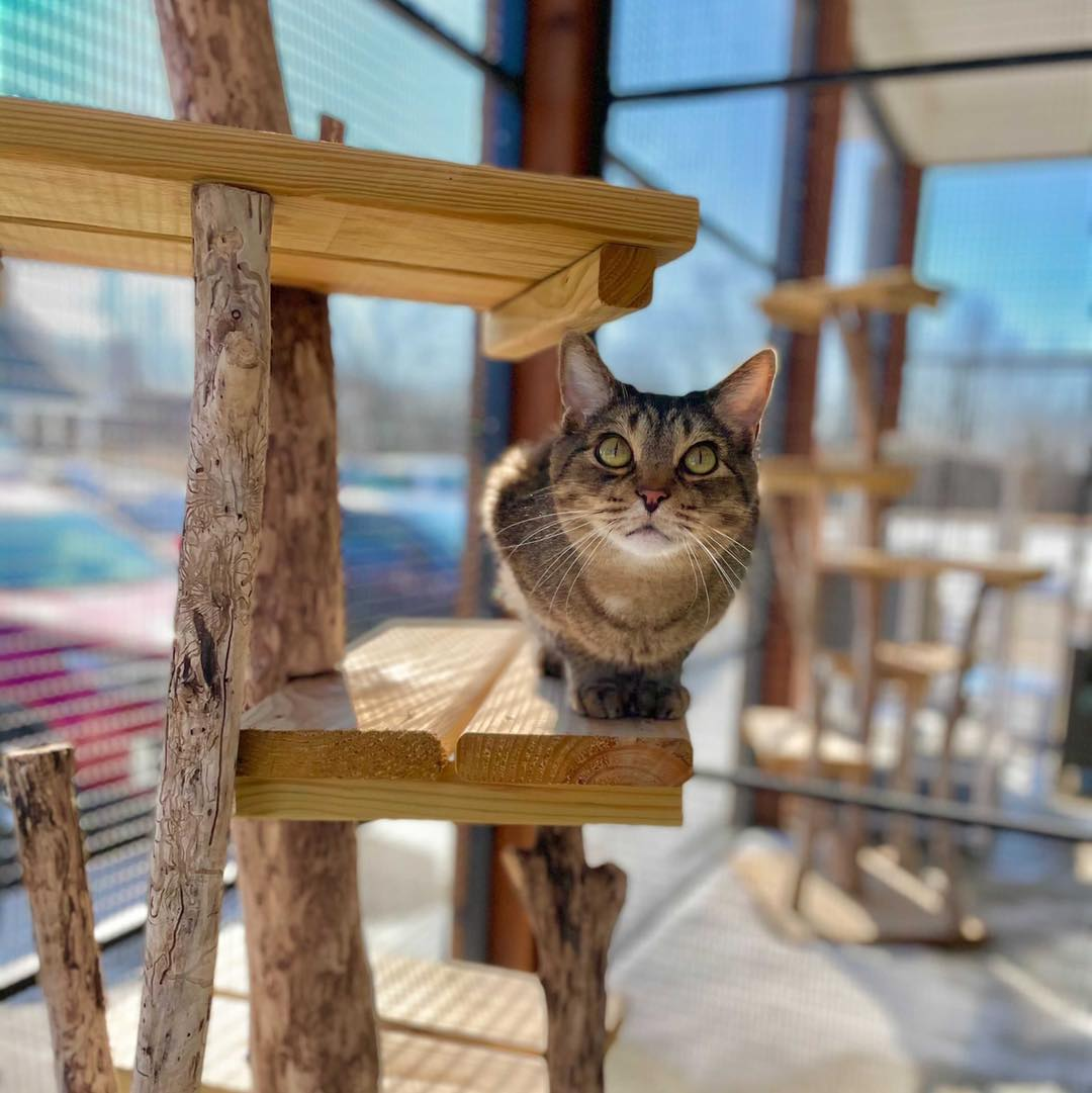 #FelineFriday #CatsOfTwitter #LifesSimplePleasures #SunnyDays #AdoptASeniorCat  Enjoying the catio at our adoption center in Woodstock, IL on a bright, sunny day.