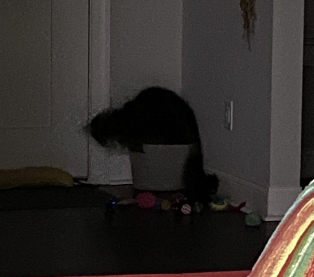 Such a potato photo. He was way on the other side of the room and it was dark. Emptied his toy basket so obviously it's was time for #IfIFitsISits #CatsOfTwitter