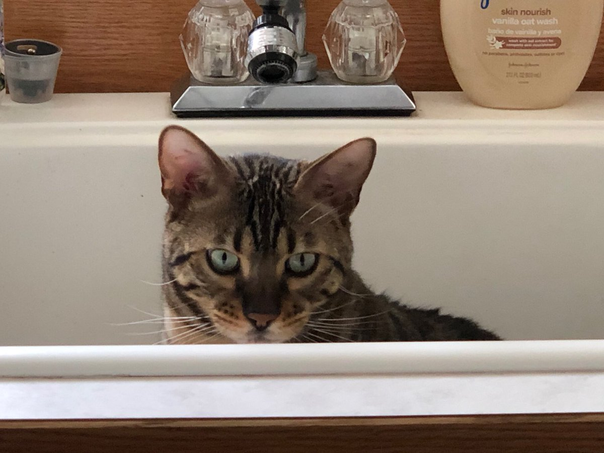 I'm waiting...someone turn on the water! #catsofinstagram #CatsOfTwitter #CatsOnTwitter #CatsOfTheQuarantine #cute