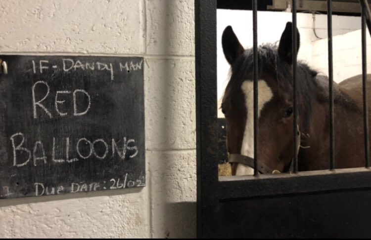 Meanwhile, in the foaling unit, this lady is waiting for her first foal by Dandy Man.