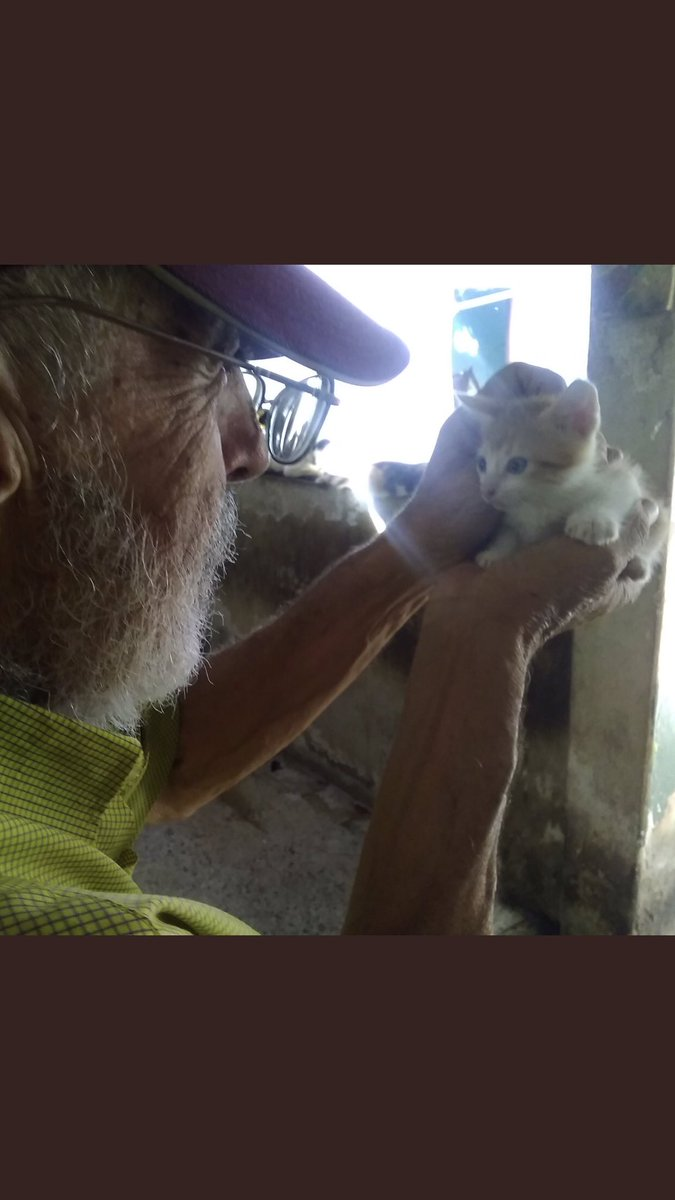 RT Pl support the Amazing #CatDads .@reinosoj2 😻😻 Sanctuary, they care for 60+ with very little + in ever worsening conditions 🙏 We r their life line to the 🌎   Every $ helps them in their struggle #WorldSolidarity 🌎💞 #TogetherWeAreStrong 💪❤️😻