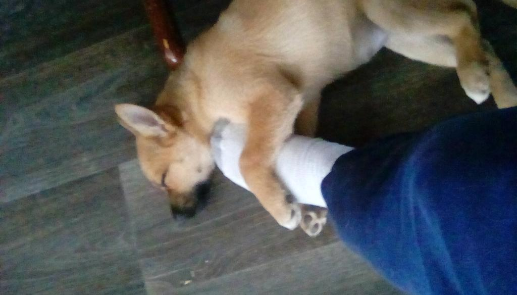 My leg hurts and my foot is asleep, but i don't wanna move it. #dogsoftwitter
