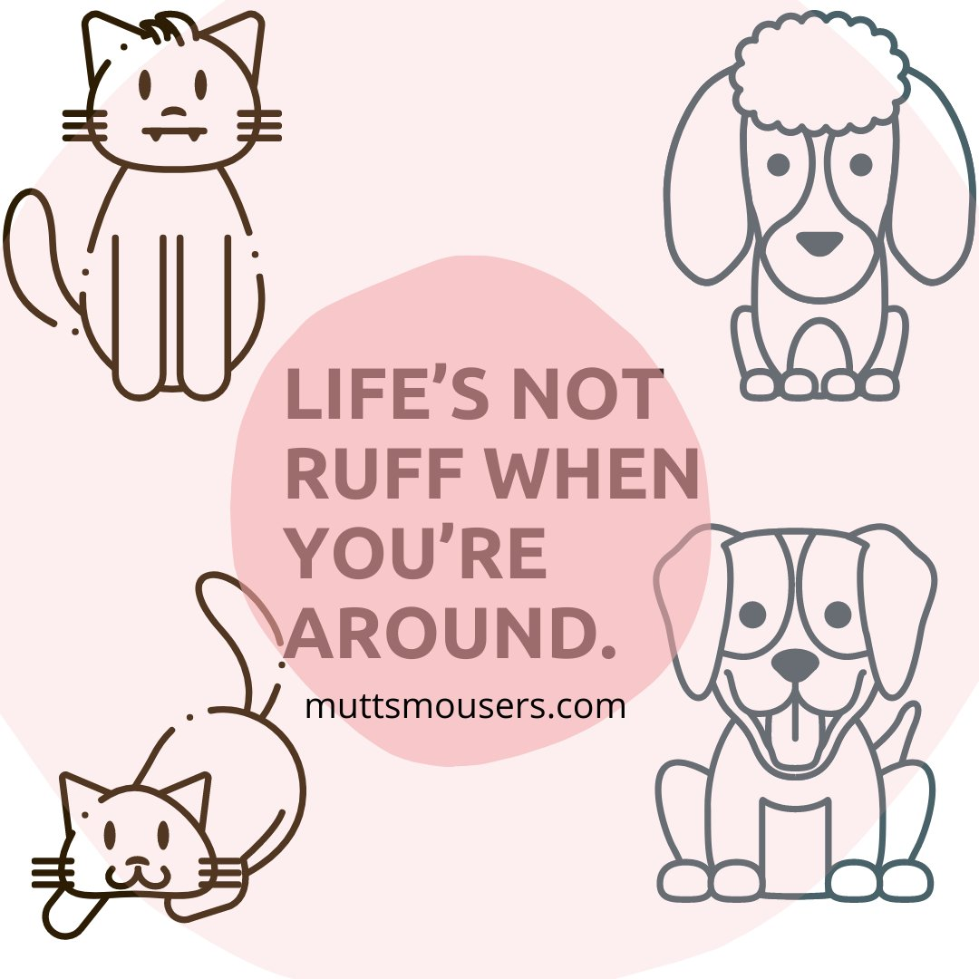 Have a pawsome weekend furry friends! 🖤🐾🧸  . #weekendvibes #muttsnmousers #CatsOfTwitter #petlover #cat #dog #petgiftbaskets #happyweekend #dogsoftwitter #woof #meow #doggifts #catgifts #USA #Canada