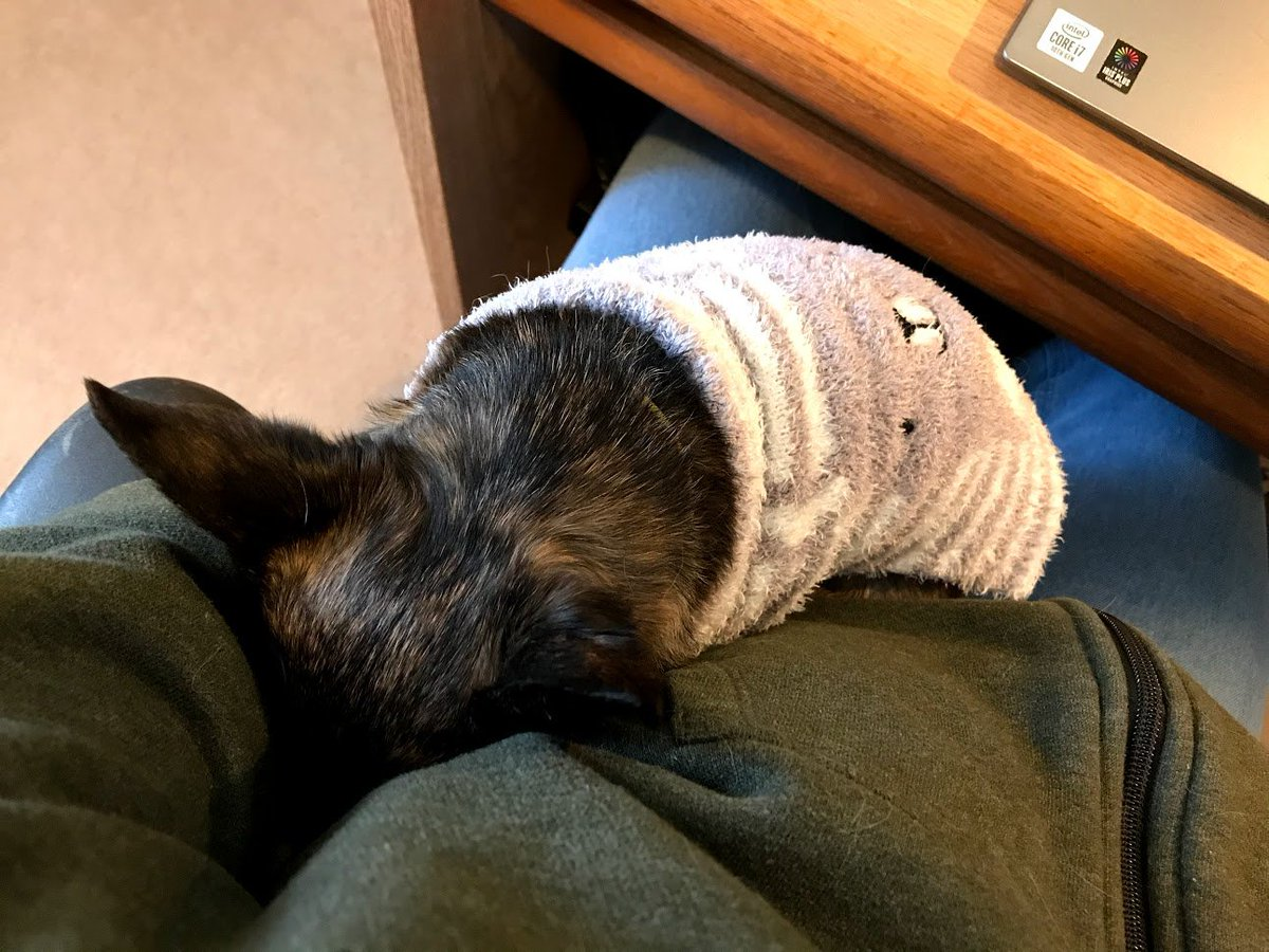 Forced to work one-handed because a little dog has commandeered my left arm for a mid-afternoon nap. #WorkFromHome #DogsOfTwitter