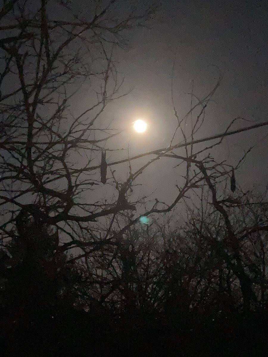 A snow moon tonight 🌙 🐾🐾 #SnowMoon #dogsoftwitter #dogs