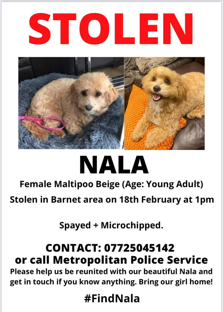 1 RT  1 Like 1 fleet Could make all the difference to #FindNala  It takes a split second to press that button! Please please please #help  #dog #dogs #dogsoftwitter #Twitterstorm #twitterdogs #nala #bringnalahome #family #stolen #heartbroken #london #uk #wales #england #viral