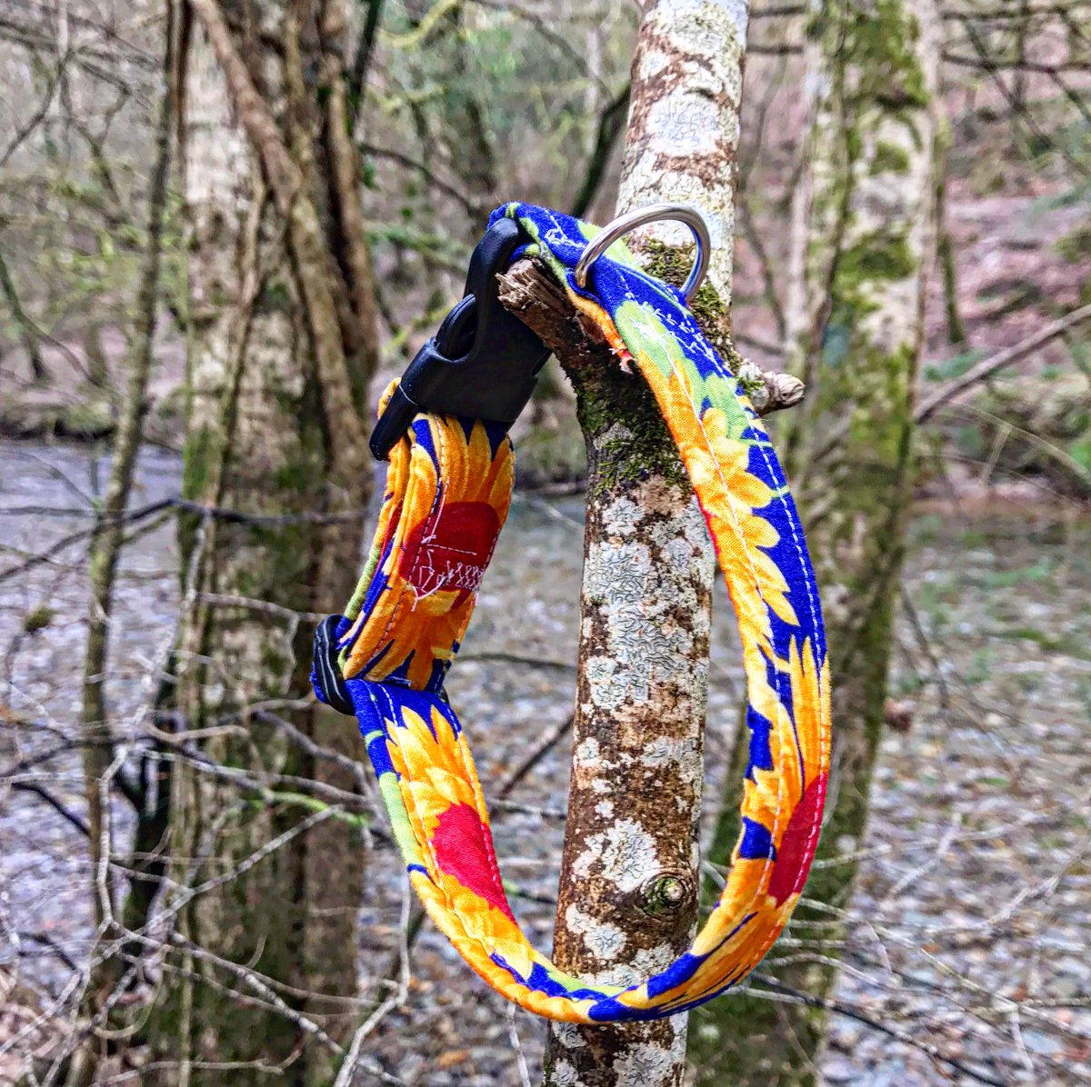 Our sunshine collar is a fantastic part of our Spring collection, with the deep royal blue and colour popping yellow sunflowers, this collar will make your dog stand out in nature. #dogcollars #dog #SmallBusiness