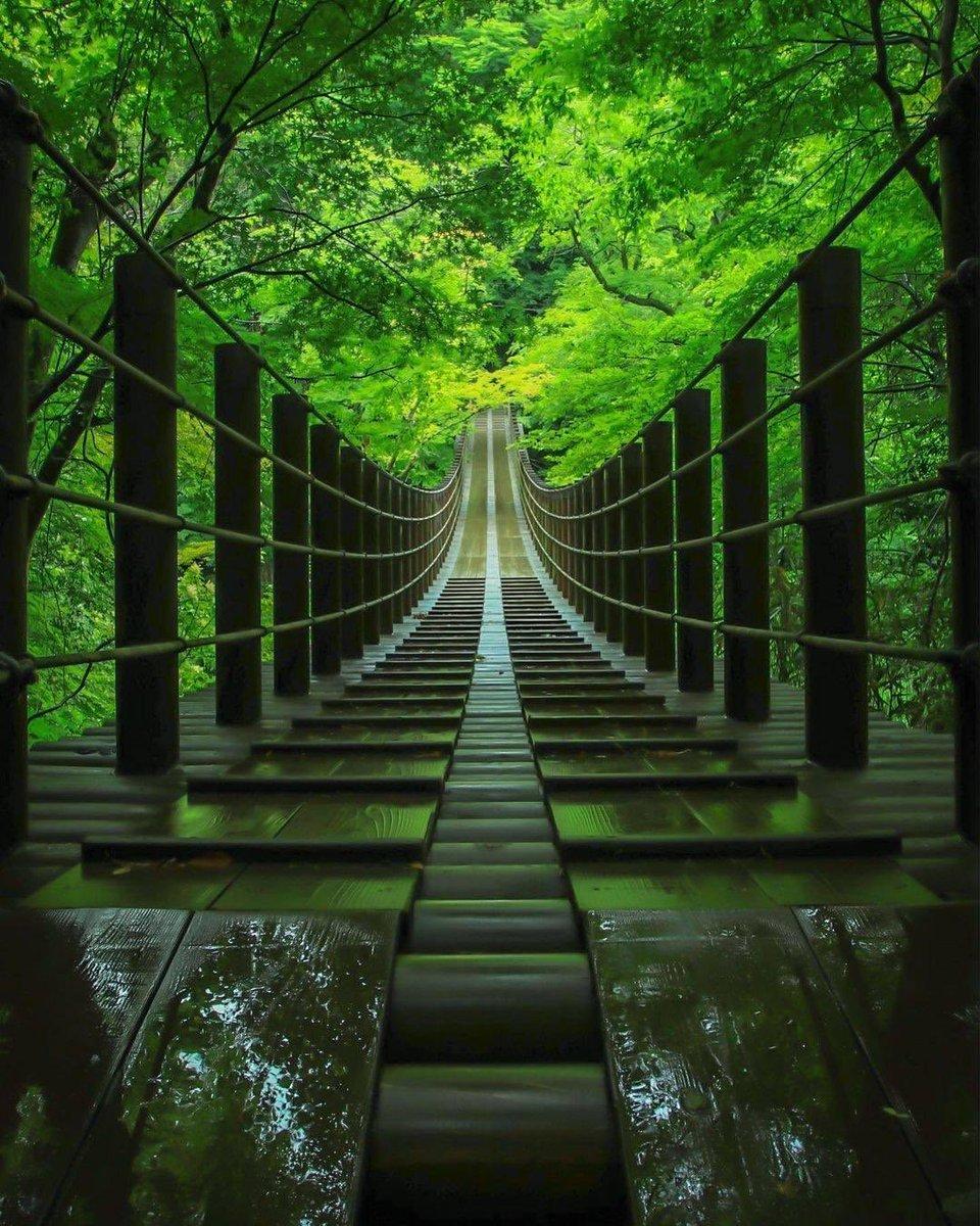 Hananuki Gorge, Japan is all kinds of 💚 Shot by koji instagram.com/taurusody
