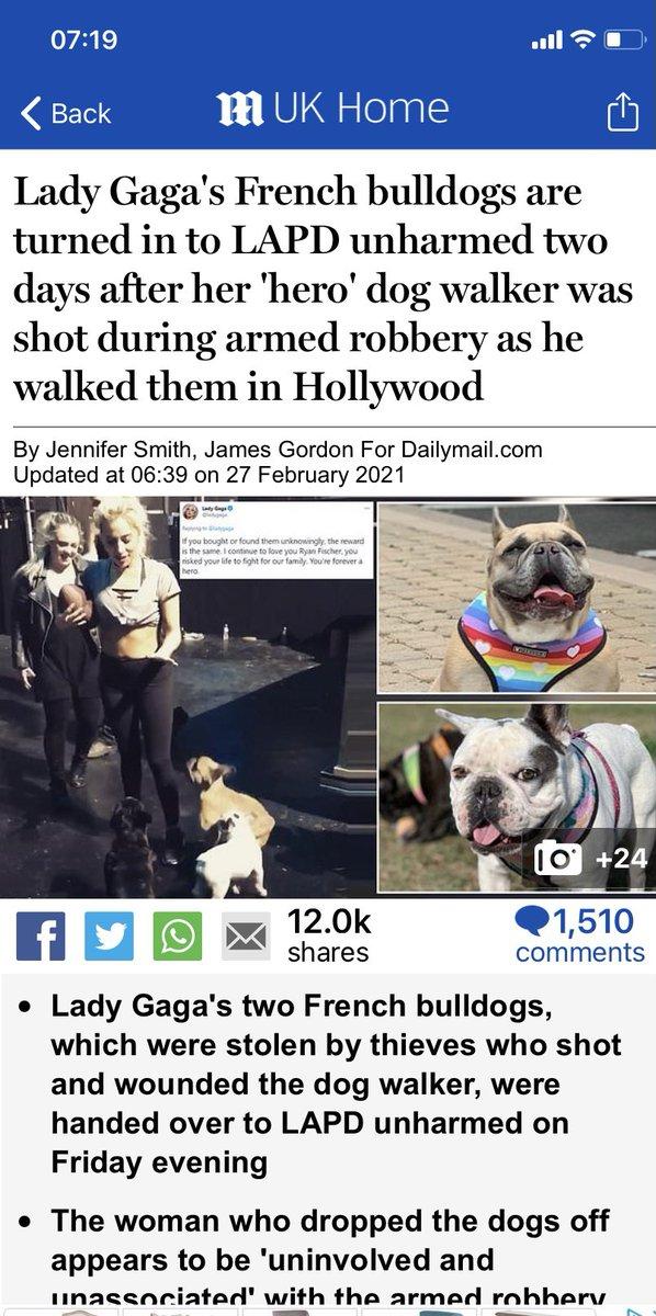 Koji & Gustav are safely returned to #ladyGaga  Such great news for a Saturday morning! #GoodMorningTwitterWorld #LadyGagaDogs #dogsarefamily #dogs #dognursery #dogwalker