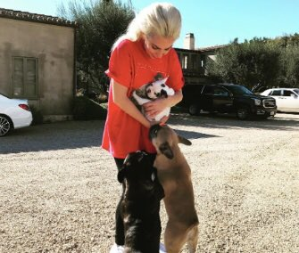 Replying to @PopBase: Lady Gaga's two stolen dogs have been recovered safely.