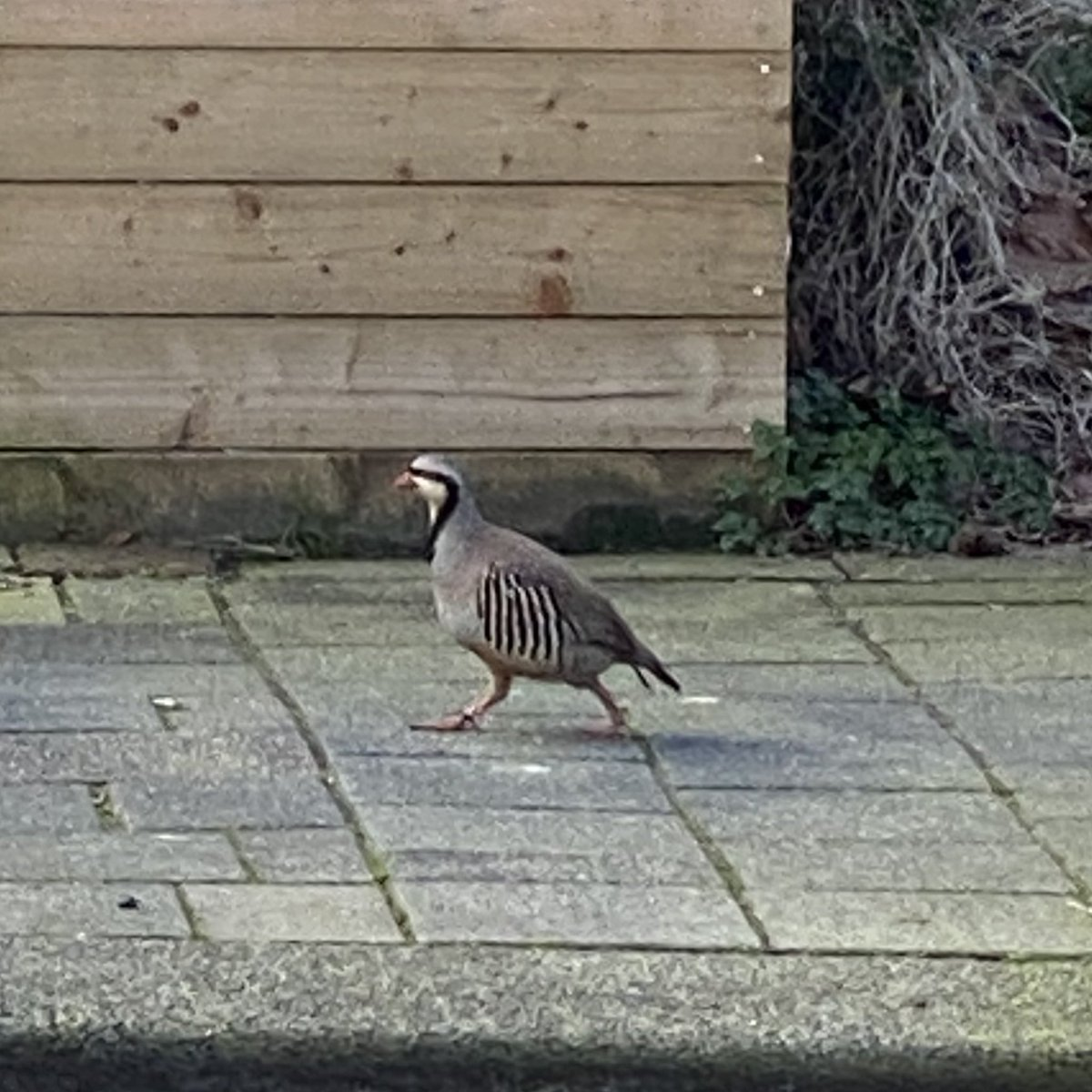 test Twitter Media - Deze #vogel zie je niet iedere dag door je straat lopen in #Rotterdam. Rara rare vogel..ehh raad de vogel. Welke vogel is dit? Morgen het antwoord in de reacties. #vogels #samenvoordieren #vogelhulp #wieweethet #raadsel https://t.co/UBiELnXDVM