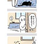 常に飼い主さんの隣にいたい?飼い主さんの行動が気になりすぎる猫の絵日記!