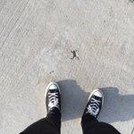 一体どこに消えた?カエルの形に固まったコンクリート!