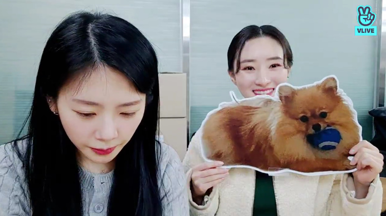 SUA: I am afraid of puppies, actually I am a bit scared of Cherry.  SUA: PIE is not scary. JIU: PIE is like Yoohyeon.  --------  Okay, so SUA is not scared of Yoohyeon. We know XD