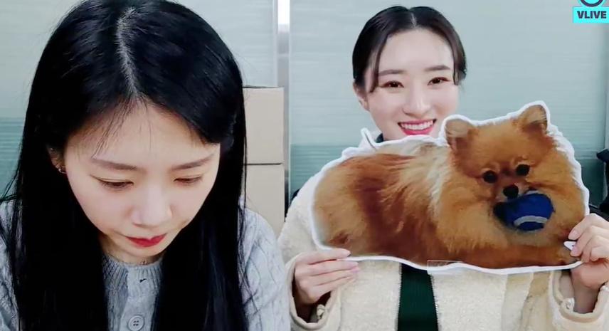 Pie so cute~~ Jiu : I wonder if Pie doing well~ Pie and Cherry have to meet~