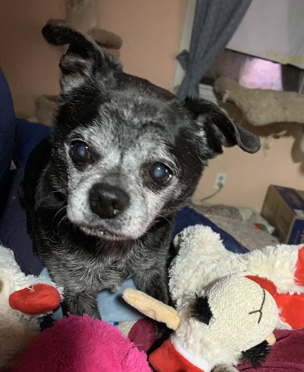 """G'morning! My mom is so positive. She fell down the stairs this morning & instead of getting upset said, """"Wow! That's the fastest I've moved in years!""""                                   #SaturdayMorning                                 #Dogs"""