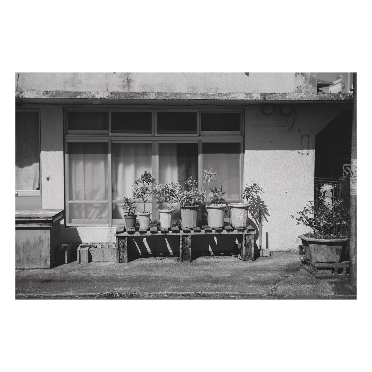 鉢。 #写真 #ファインダー越しの私の世界  #写真シェア #写真好きと繋がりたい #monochrome #モノクロ #モノクロの世界 #Nikon #Z6 #Summitar #沖縄 #お写ん歩  #vsco