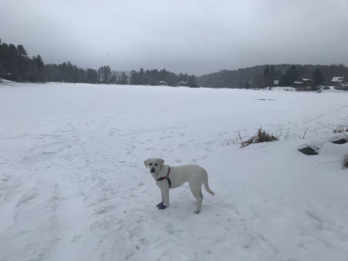 test Twitter Media - Lola at the lake, snowy morning https://t.co/3AVt9MFBNQ