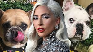 """Lady Gaga coughs up 1/2 Million to Kidnappers for return of her dogs. This is WHO she is. The """"Dog Walker"""" that was brutally attacked & Shot ? He's on his own... #MSNBC @DNC #Diplomacy #Democrats #CNN @THR  #music #iHeartAwards #Government #ABC #CBS #coronavirus #pandemic"""