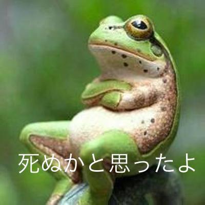 おもちゃかと思ったら?ニコニコ顔の可愛らしいカエルでした
