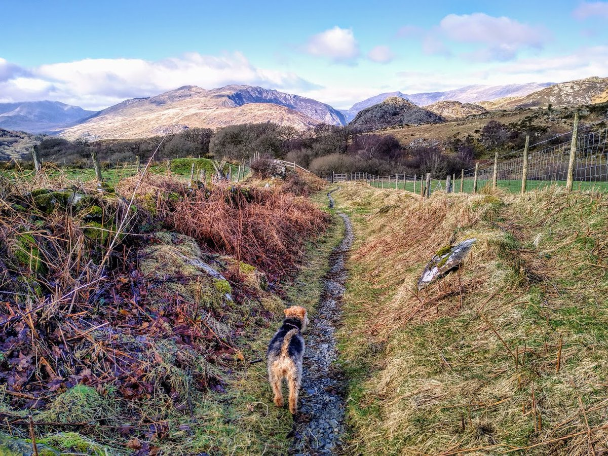 Snowdonia getting ready for spring #snowdonia #capelcurig #welshterrier #walking #freshair  #SaturdayVibes #SpringIsComing #dogsoftwitter #welshpassion #welshmountains #getoutside