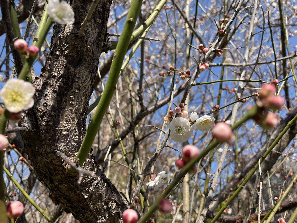 もう春だよ #photography #写真 #春 #つぼみ  #写真撮っている人と繋がりたい  #キリトリセカイ