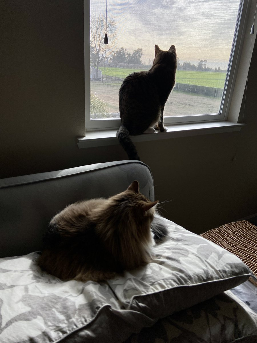 Mooch and Earl waiting to start this #Caturday.  #cats #CatsOfTwitter #SaturdayMorning #SaturdayThoughts #SaturdayVibes