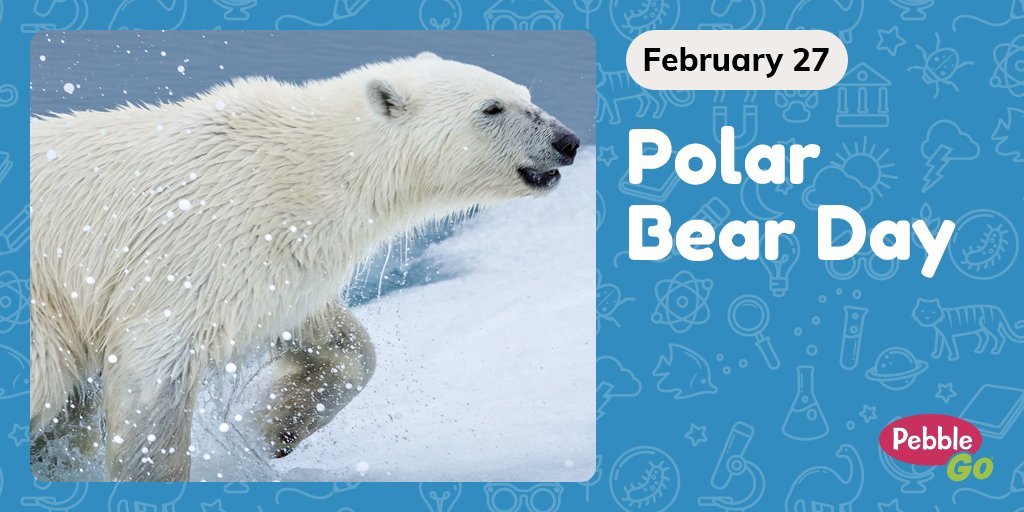 Polar bears live on the Arctic coasts and can weigh anywhere between 700 & 1600 pounds! #InternationalPolarBearDay is about protecting these furry beasts! Read more about polar bears on #PebbleGo! Find more fun February holidays with the PebbleGo calendar: