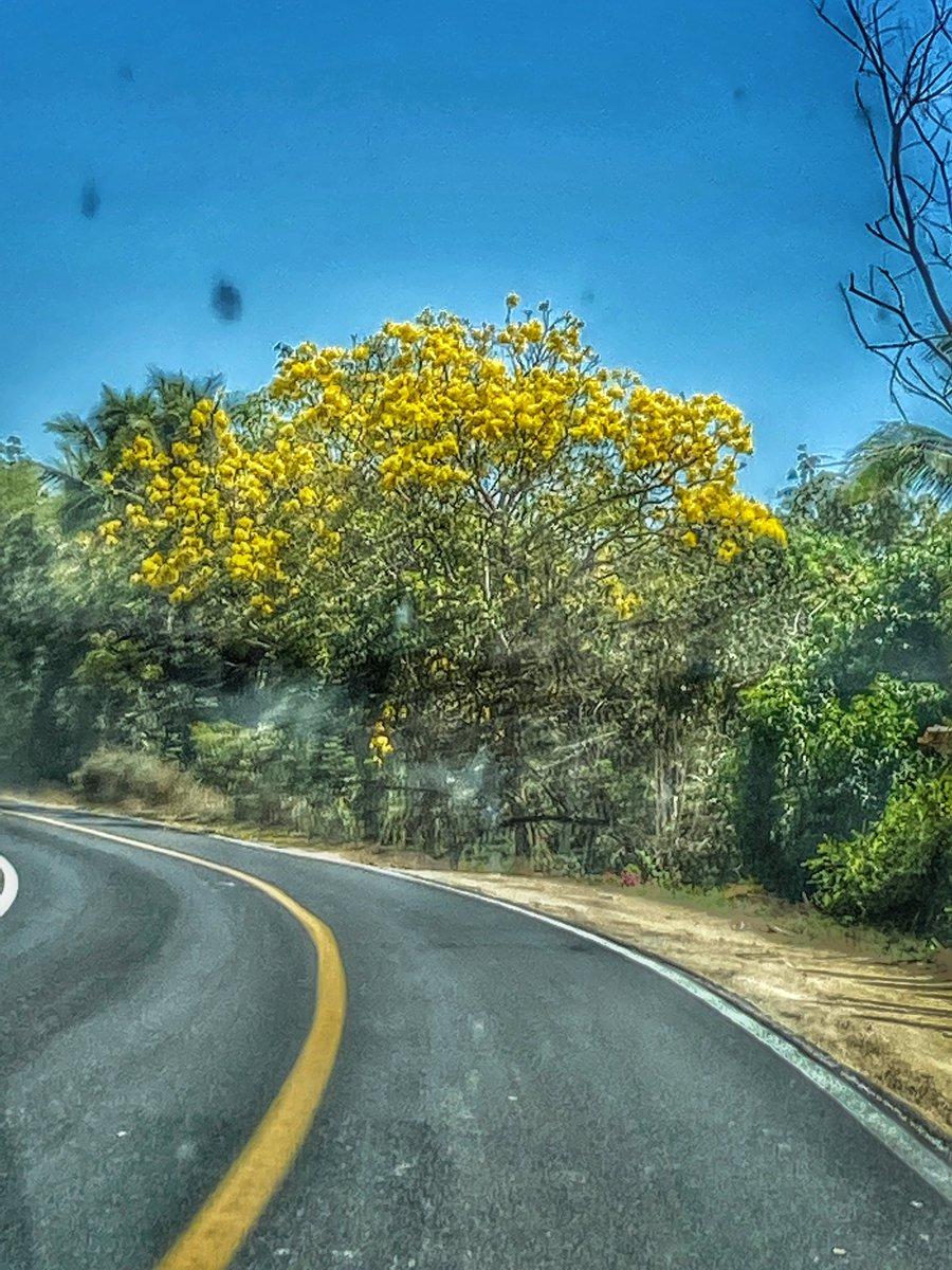 #PhotoOfTheDay #Yellow