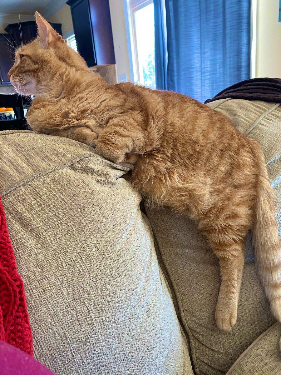 Leg loooong  #Caturday #CatsOfTwitter #purrfectapawcalypse